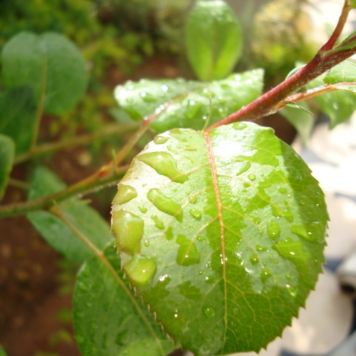 what's new about water on leaves